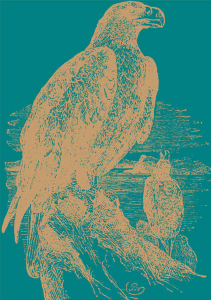 Teal Drawing - Golden Eagle On Teal by