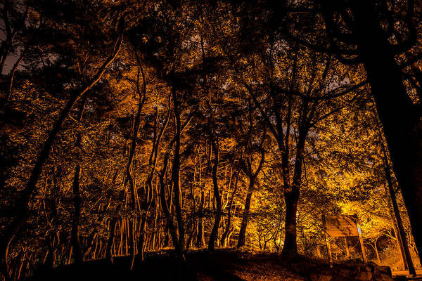 Photograph - Golden Evening by Alex Lapidus