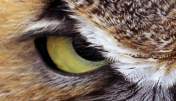 Photograph - Golden Eye  by Jennifer Robin