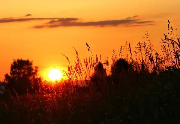 Photograph - Golden Field by Candice Trimble
