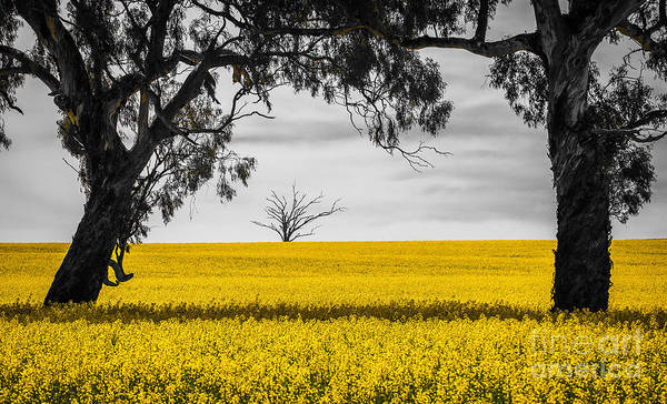 Photograph - Golden Field by Russell Brown