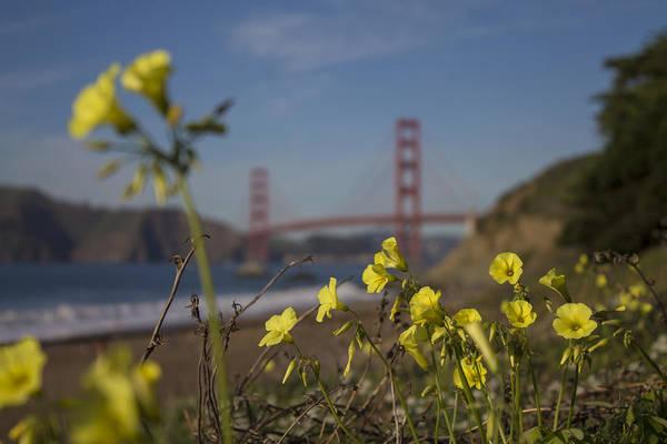 Wall Art - Photograph - Golden Gate Flowers by Jeremy Jensen