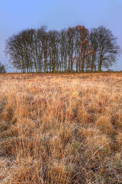 Fern Frost Photograph - Golden Grass Landscape With Group Of Trees  On Horizon At Sunris by Matthew Gibson