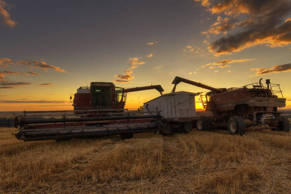 Photograph - Golden Hour Grain by Mark Kiver