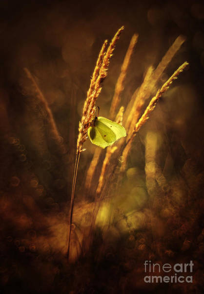Wall Art - Photograph - Golden Hour by Jaroslaw Blaminsky