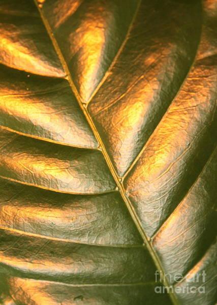 Photograph - Golden Leaf 2 by Carol Groenen