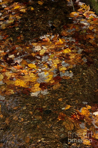 Photograph - Golden Leaves by Cynthia Mask