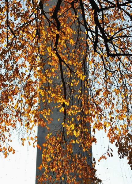 Wall Art - Photograph - Golden Leaves In Mt Vernon by Marcus Dagan