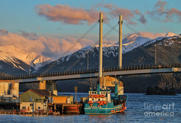 Wall Art - Photograph - Golden Light On Sitka by Scarlett Images Photography