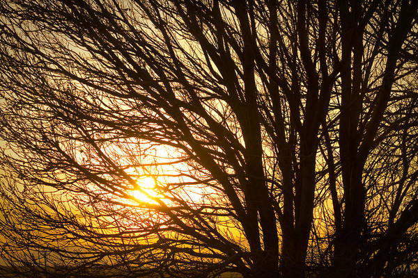Photograph - Golden Light Shining Through by James BO Insogna