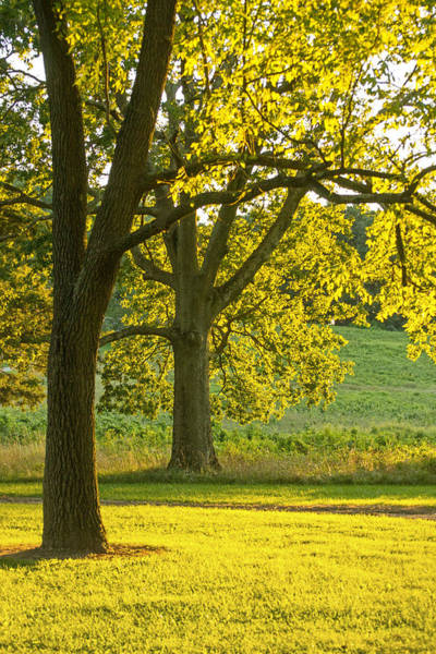 Photograph - Golden Light2 by Rima Biswas