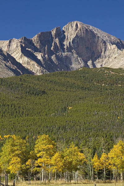 Photograph - Golden Longs Peak View by James BO Insogna