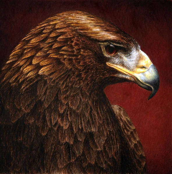 Wall Art - Painting - Golden Look Golden Eagle by Pat Erickson