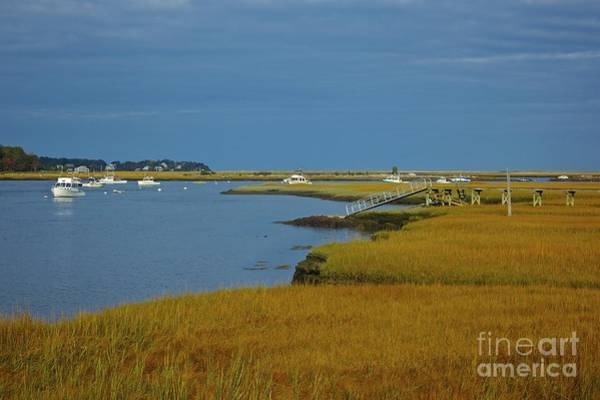 Photograph - Golden Marsh by Amazing Jules
