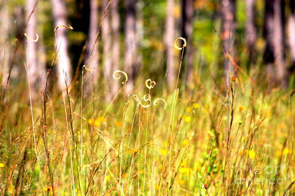 Photograph - Golden Mississippi Nature by Carol Groenen