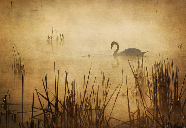Photograph - Golden Mist I by Dale Kincaid
