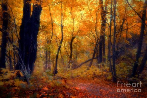 Photograph - Golden Moments by Tara Turner
