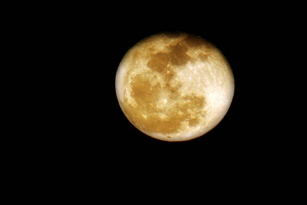 Photograph - Golden Moon by CE Haynes