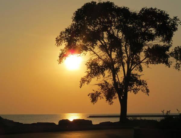 Photograph - Golden Morning by Kay Novy