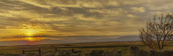 Wall Art - Photograph - Golden Morning by Nancy Marie Ricketts
