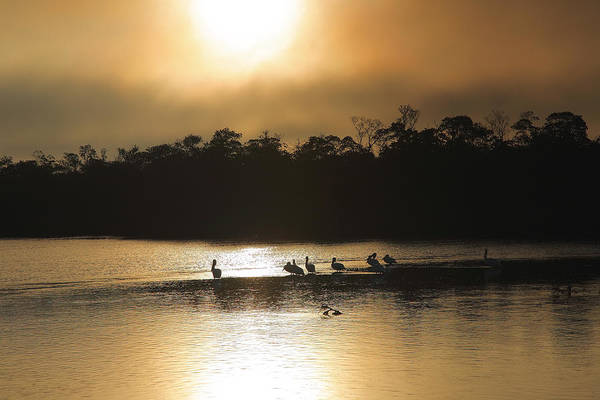Pelican Island National Wildlife Refuge Wall Art - Photograph - Golden Morning On Ding Darling by Steven Ainsworth