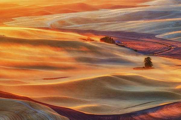 Golden Photograph - Golden Palouse by Lydia Jacobs