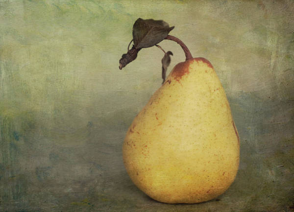 Single Leaf Wall Art - Photograph - Golden Pear by Jill Ferry