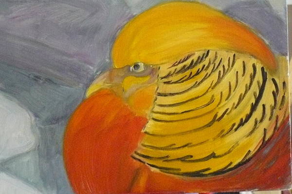 11x14 Painting - Golden Pheasent by Robert Libutti