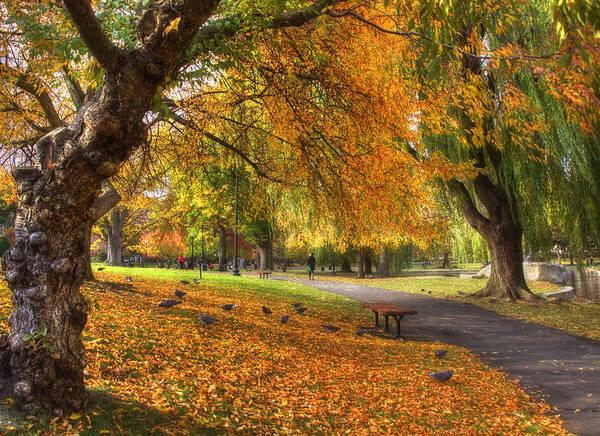 Photograph - Golden Public Garden by Joann Vitali