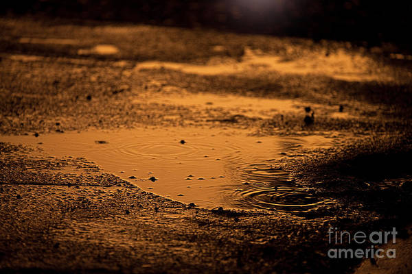 Photograph - Golden Raindrops At Dusk by Cindy Singleton