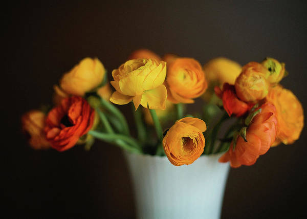 Vase Of Flowers Photograph - Golden Ranunculus by Melissa Deakin Photography