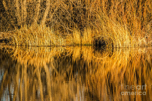 Photograph - Golden Reflections by Sue Smith