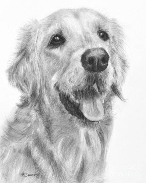 Art Print featuring the drawing Golden Retriever Duncan by Kate Sumners