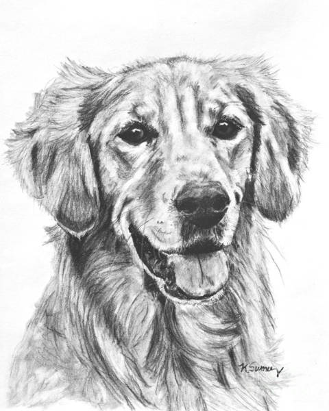 Drawing - Golden Retriever Head And Shoulders by Kate Sumners