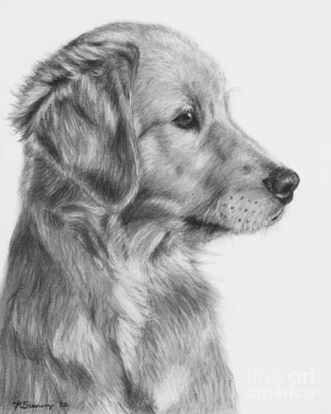 Art Print featuring the drawing Golden Retriever Puppy In Charcoal One by Kate Sumners