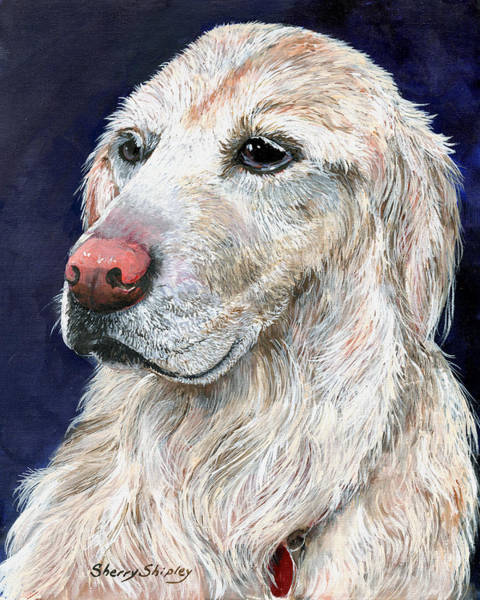Painting - Golden  Retriever by Sherry Shipley