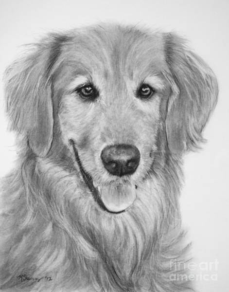 Art Print featuring the drawing Golden Retriever Sketch by Kate Sumners