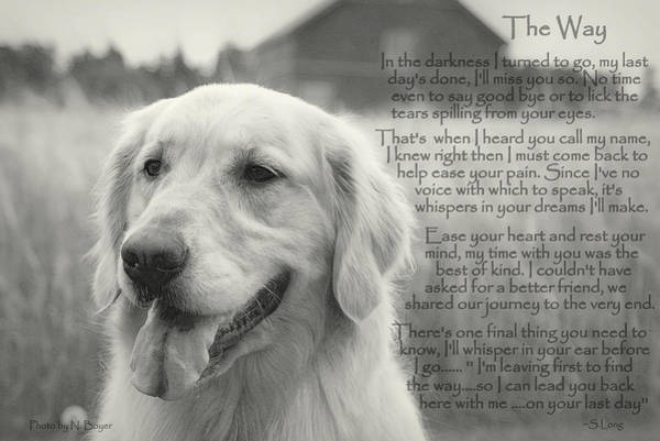 Inspirational Quote Photograph - Golden Retriever The Way by Sue Long