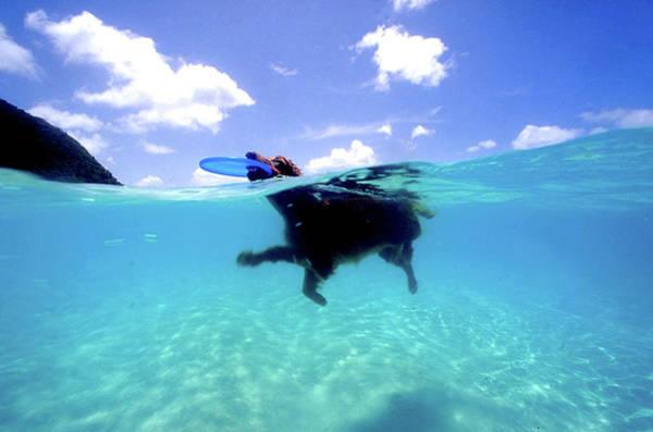 British Virgin Islands Photograph - Golden Retriver With Freesbe by Armando F. Jenik