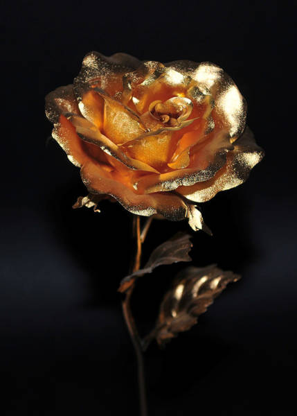 Photograph - Golden Rose by Dragan Kudjerski