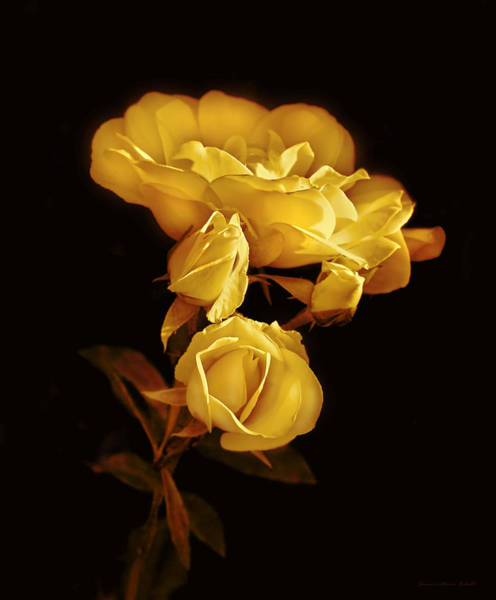 Wall Art - Photograph - Golden Roses At Midnight by Jennie Marie Schell