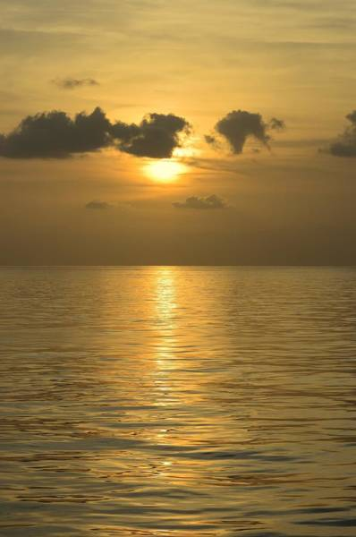 Photograph - Golden Sea by Bradford Martin