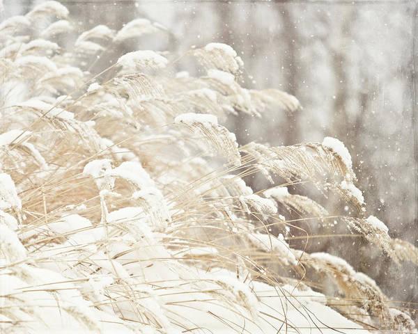 Lisa Russo Wall Art - Photograph - Golden Snowgrass Winter Photography by Lisa Russo