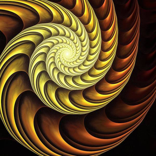 Digital Art - Golden Spiral by Anastasiya Malakhova