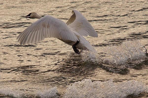 Photograph - Golden Splashes by Leda Robertson