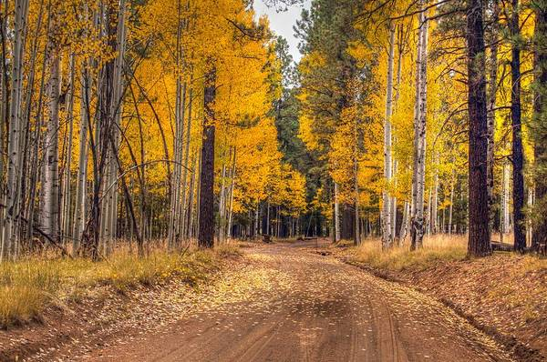 Photograph - Flagstaff Fall Color by Tam Ryan
