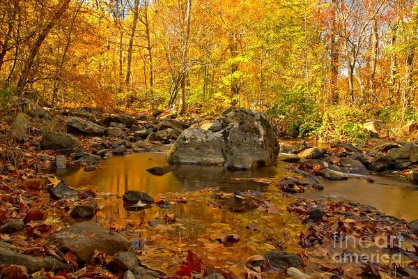 Photograph - Golden Streams At New River Gorge by Adam Jewell