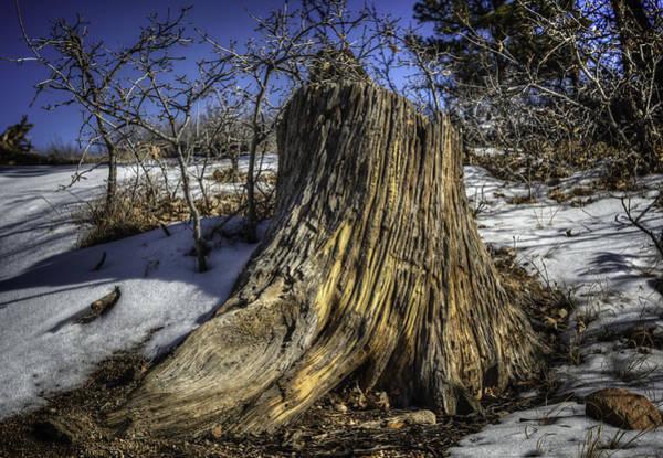 Photograph - Golden Stump by David Waldrop