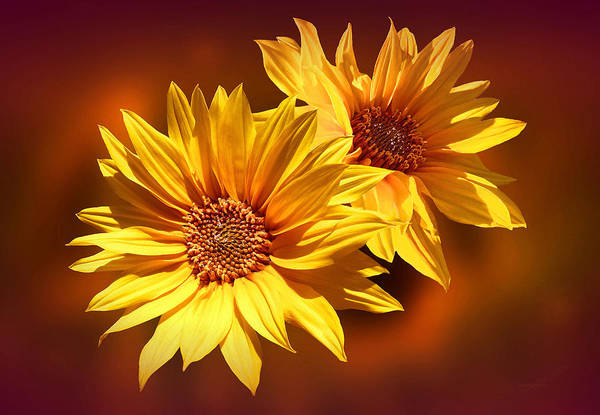 Photograph - Golden Sunflowers by Valerie Anne Kelly