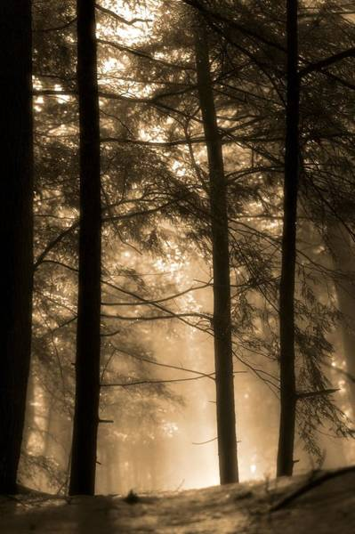 Photograph - Golden Sunrise In The Forest by Dan Sproul